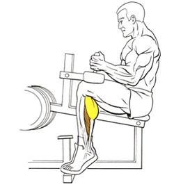 Подъемы на носки стоя, как накачать ноги, сидя, видео, польза ...